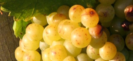 Eté 2017 : les nouveautés en matière de vins bio à Vic la Gardiole