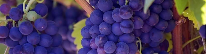 Cave à vins bio et naturels du Languedoc