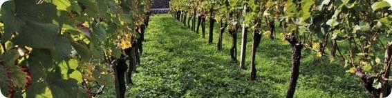 Vin nature, arguments pour