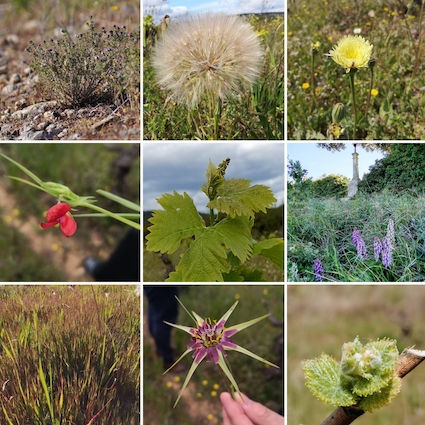 Biodiversité d'une vigne en biodynamie
