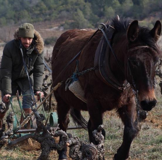 Labour vignes Ugo Lestelle vin nature