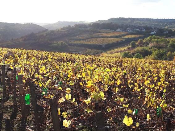 Vin-Naturel-Bourgogne-3.jpg