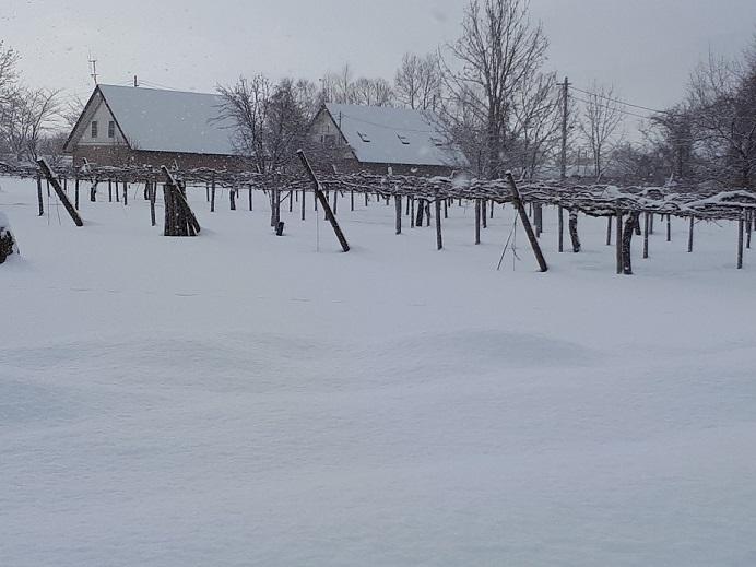 Vignoble du Japon en hiver (Yoichi, île d'Hokkaido)